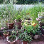 庭の植木鉢